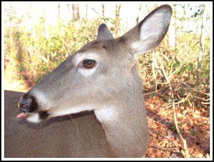 deer2_s.jpg