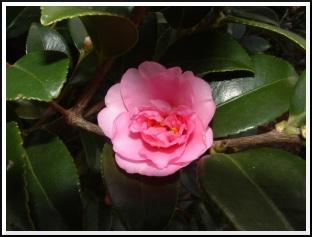 flower_s.jpg